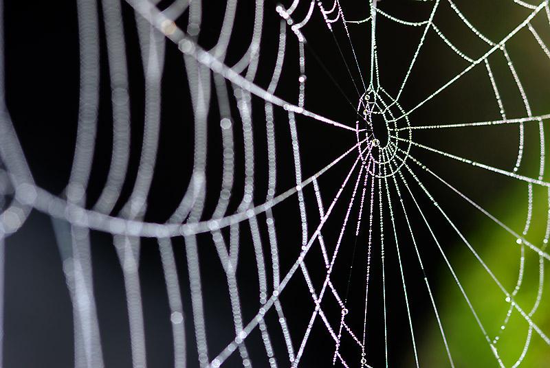 EDITORIAL: Las matrices de Opinión del Ilegítimo se balancean sobre la tela de una araña por @Randompiece