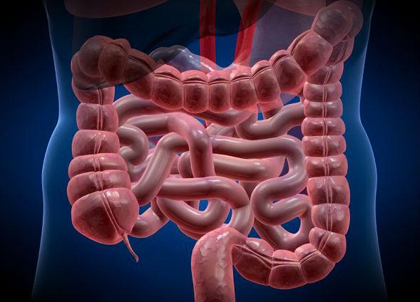 La cura para el cáncer podría estar en el intestino