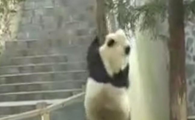 Panda-647x397.jpg