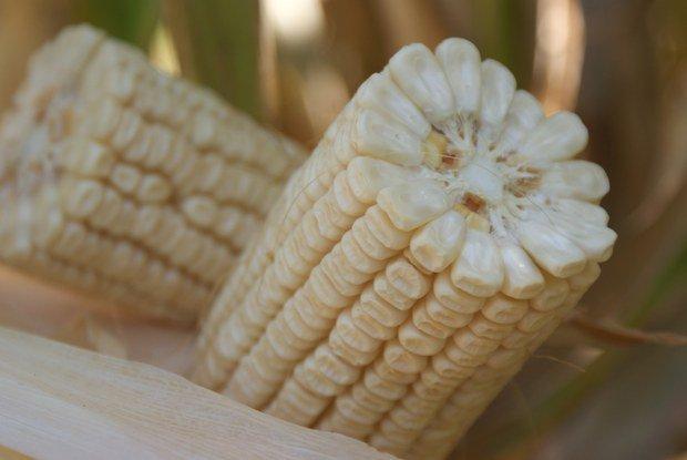 Venmaiz: Quedan pocos días de inventario de maíz a precio viejo