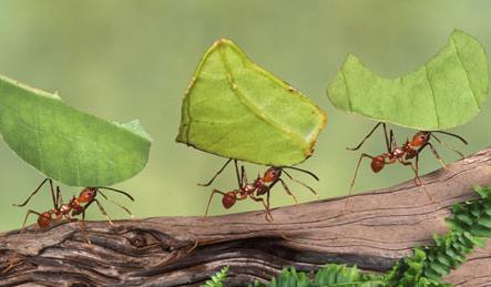 hormigas.png