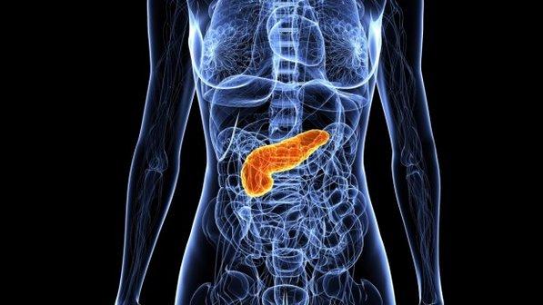 pancreas.jpeg