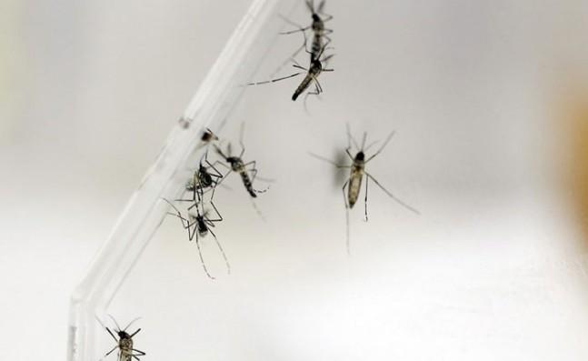 dengue-647x397.jpg