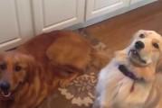 Los fails más adorables de perros (Video)