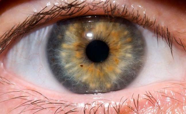cornea-647x397.jpg