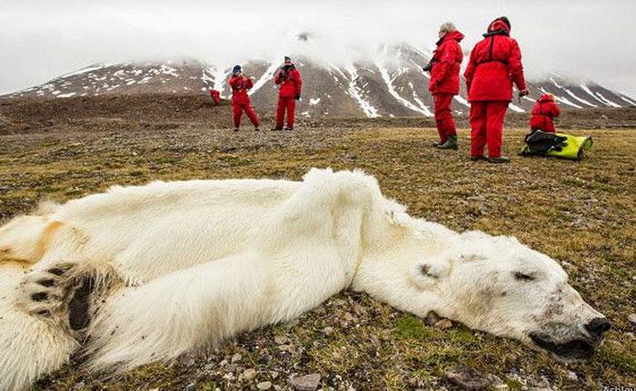 Las perturbadoras imágenes que muestran el efecto de los humanos en la Tierra