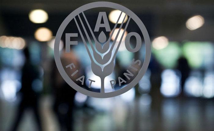 FAO: Felicitamos al gobierno de Venezuela por crear el mejor sistema de distribución de alimentos