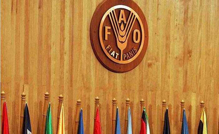 FAO6.jpg