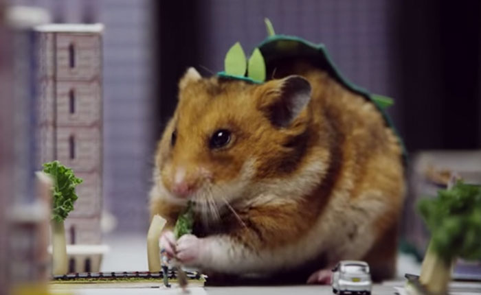 Mira cómo este precioso hamster pasó a ser un inmenso monstruo