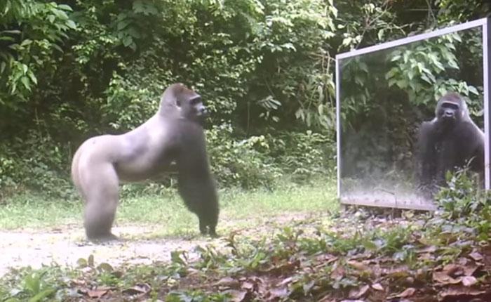 Así reaccionan los animales al mirarse por primera vez en un espejo
