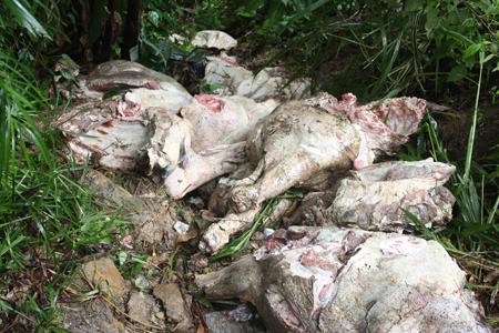 Hallaron 4 toneladas de carne descompuesta en San Antonio de los Altos