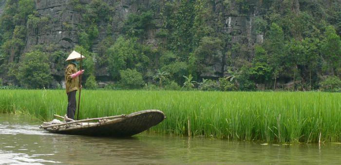 Vietnam-Arroz-AA.jpg