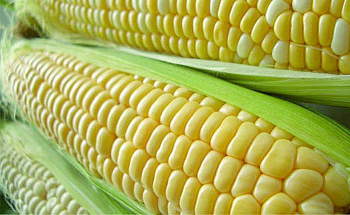 Sundee fijó precio máximo de maíz, café y arroz
