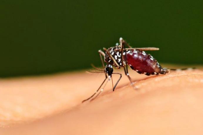 Malaria alcanza cifra histórica con 105.757 casos en 2015