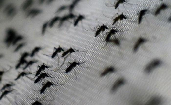 Vacuna contra dengue fue aprobada en México