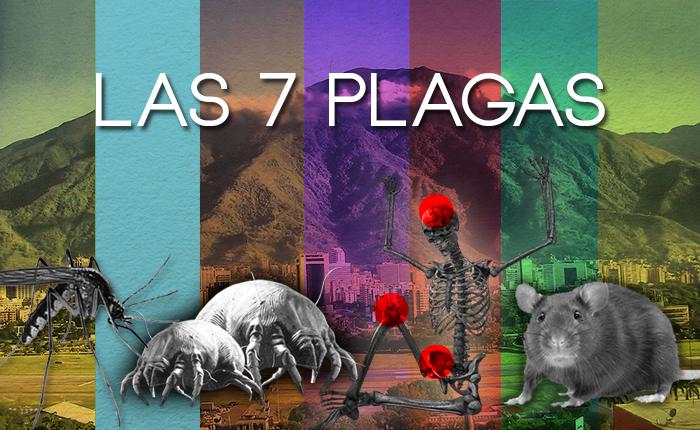 7 Plagas3