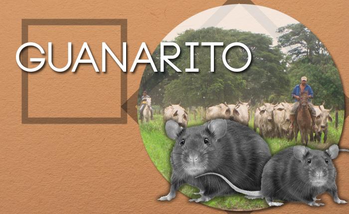 Guanarito