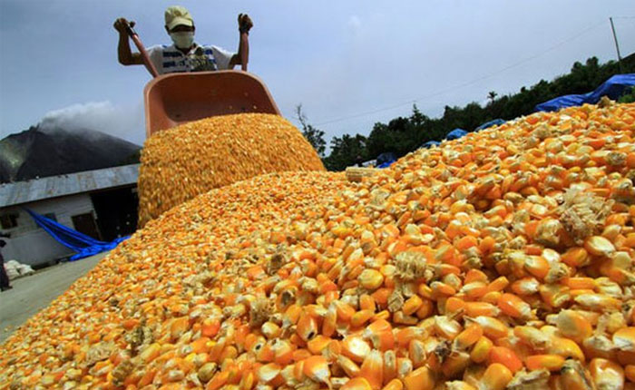 Venmaíz solicitó ajustar precio de harina precocida a Bs. 115