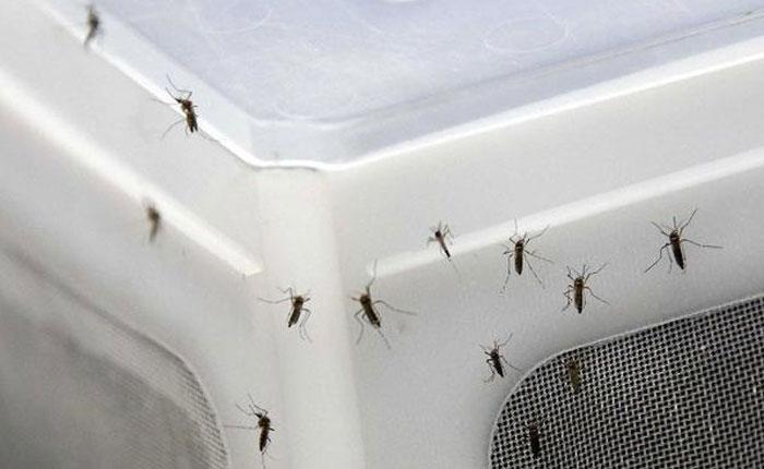 OVS: Aumentan casos de malaria, dengue, zika y chikungunya por falta de políticas sistemáticas