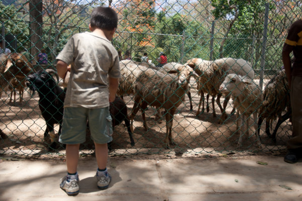 Zoo-.jpg