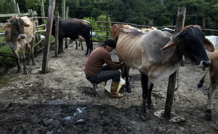 Prohiben movilizar bovinos a estados fronterizos para evitar el contrabando