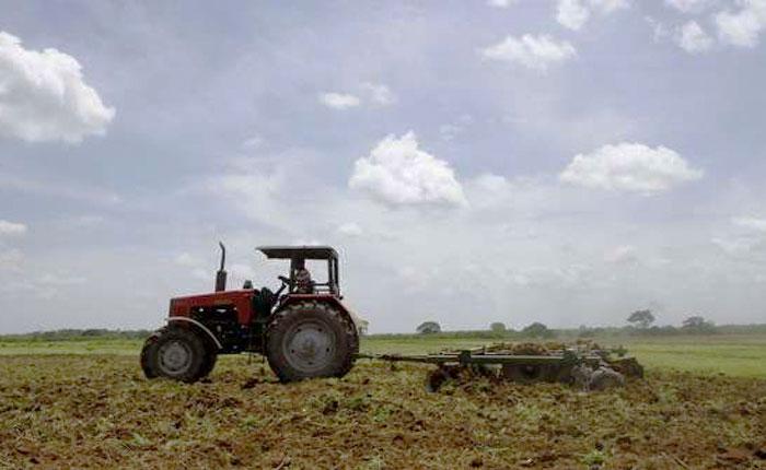 ONU: La producción de cereales disminuirá este año en Venezuela