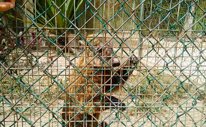 Zoológico Metropolitano del Zulia cerró por falta de alimentos