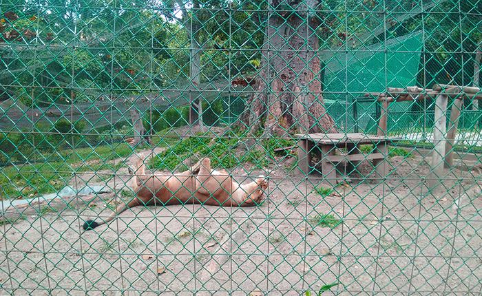 Zoologico-Caricuao2.jpg
