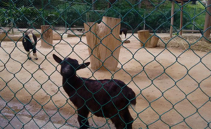 Zoológico Caricuao3