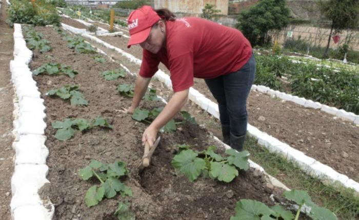 agriculturaurbana_1.jpg