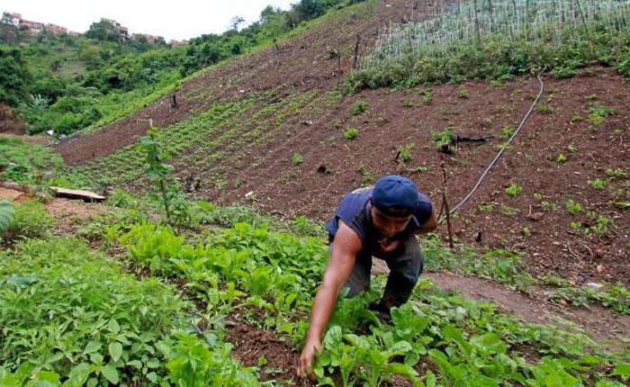 AgriculturaVenezuela.jpg