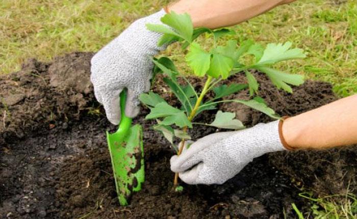 Vitalis reclutó a jóvenes mexicanos como emprendedores ambientales