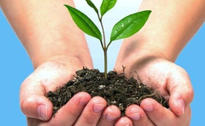¿Cómo un país sin Estado de Derecho puede ejercer la gobernanza ambiental?