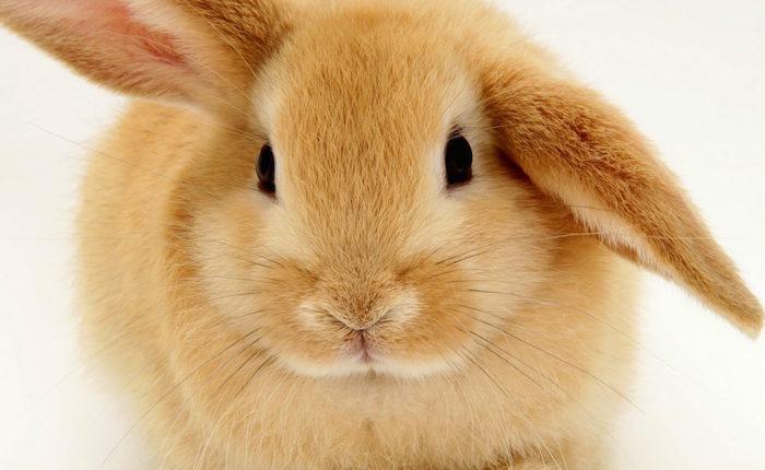El Plan Conejo de Bernal, por José Guerra