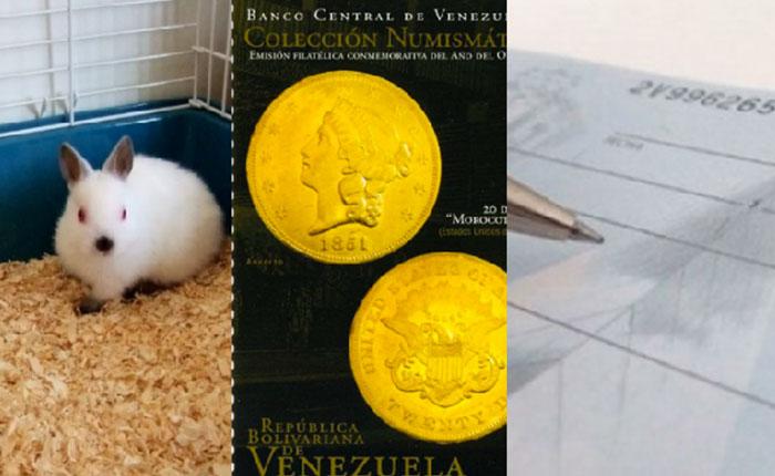 Venezuela va en Delorean: Morocotas, cheques y criar conejos