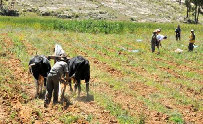 Fedeagro: Productores andinos tienen un año sin producir por culpa de Agropatria