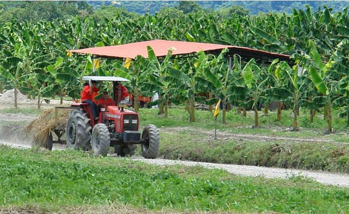 Los ganaderos venezolanos ganan cuatro veces menos que los de Colombia, dice Fedenaga