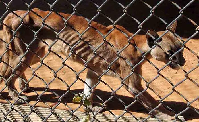 Tramitan traslado de animales hambrientos de zoológicos venezolanos a otros países