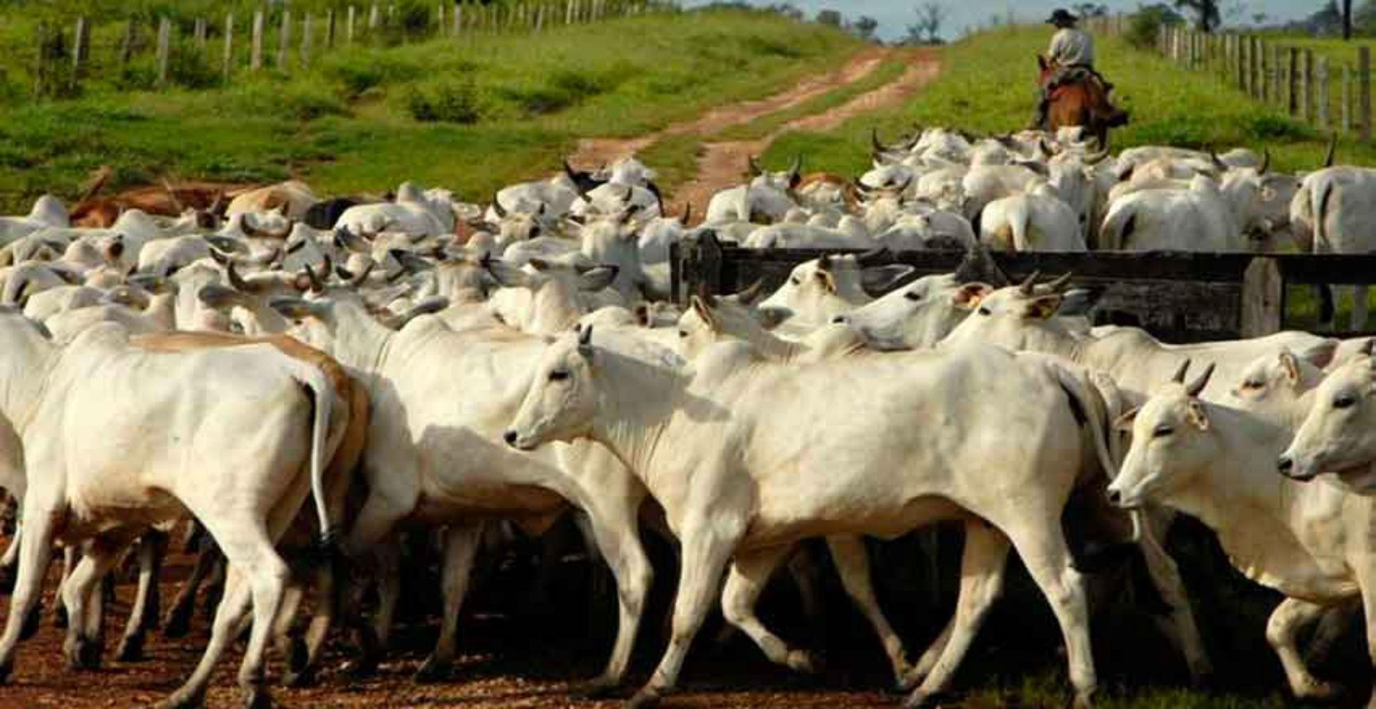 Fedenaga advierte que producción de carne y lácteos ronda 30 %