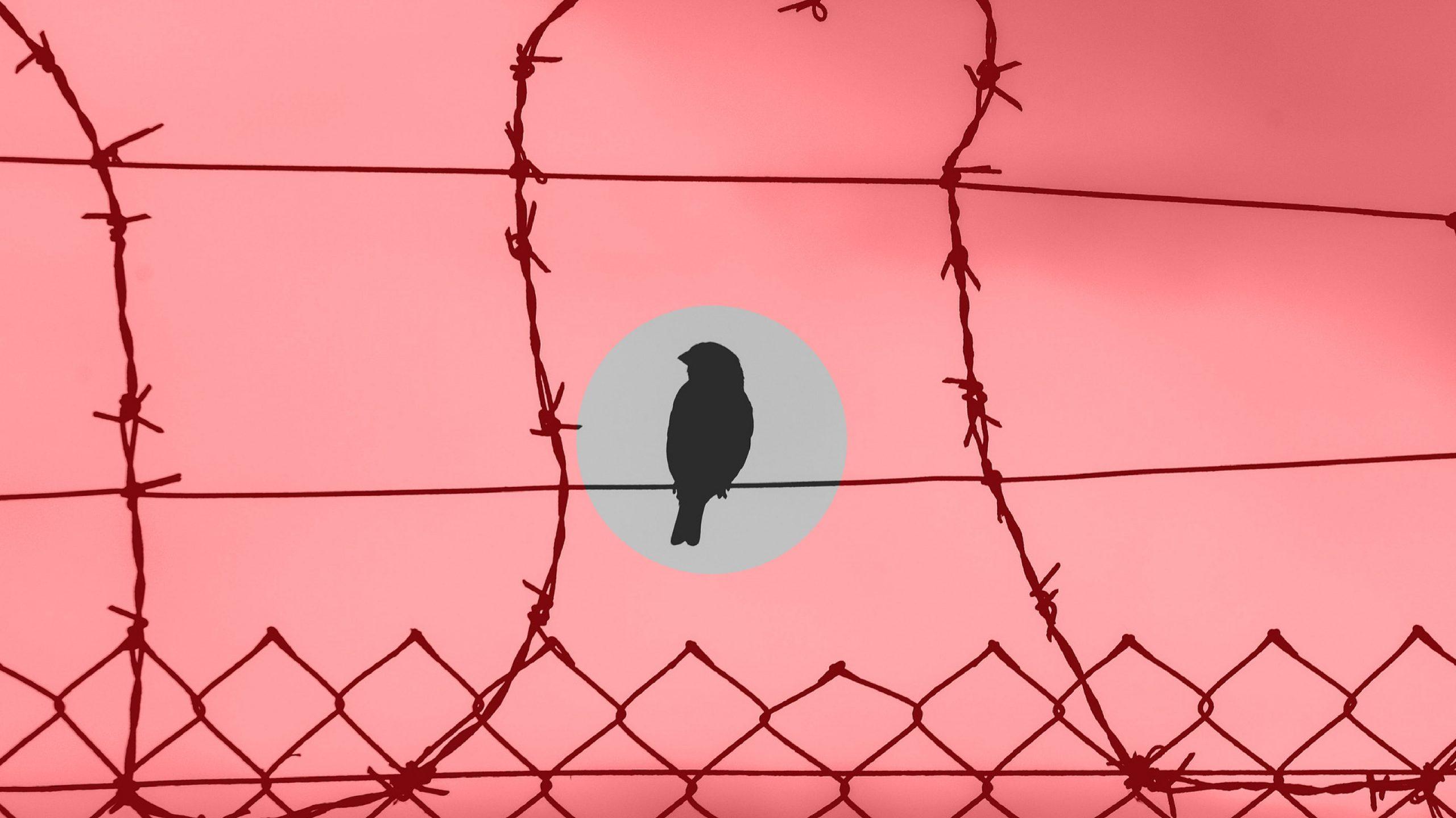 Posiciones sobre el cese de la usurpación, por Eddie A. Ramírez S.