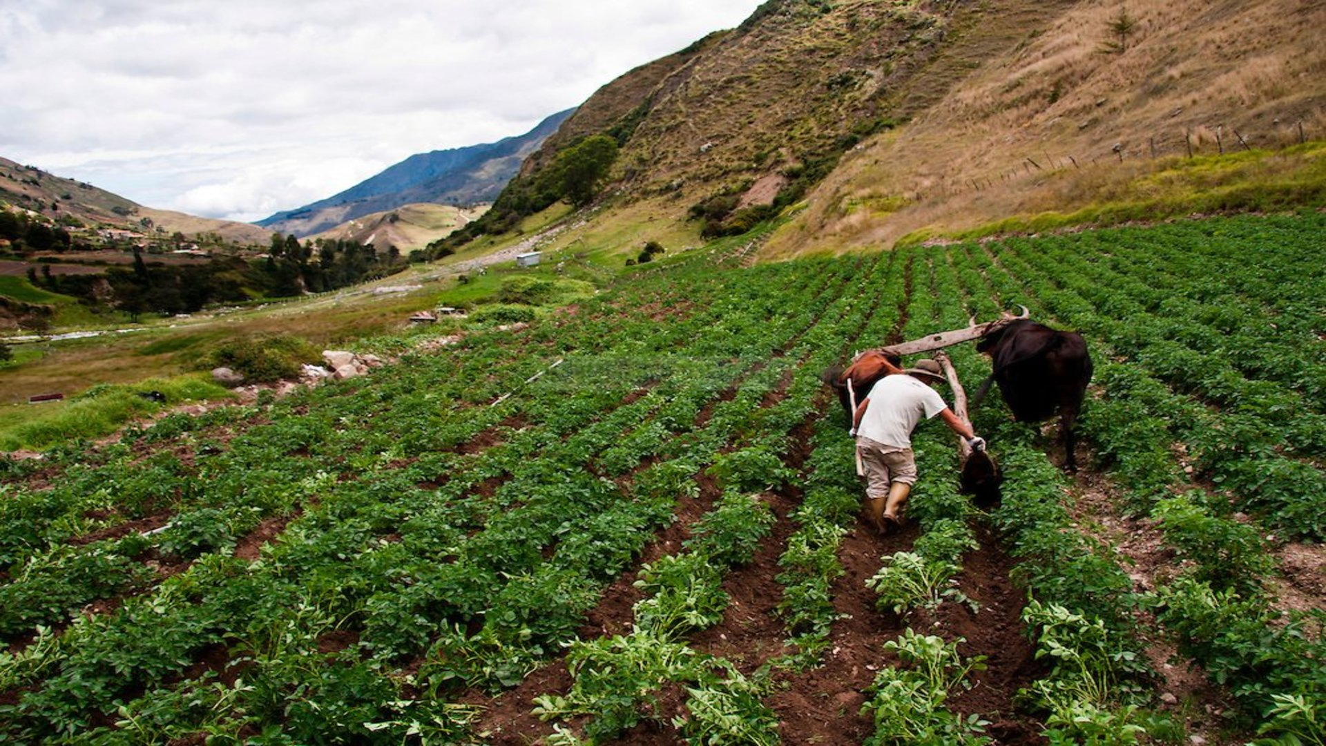 20.000 toneladas de hortalizas estarían en riesgo por falta de gasoil